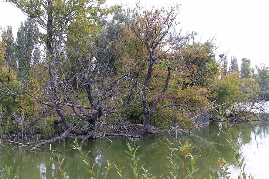 Exkursion Die Obere Alte Donau Naturschutzbund österreich