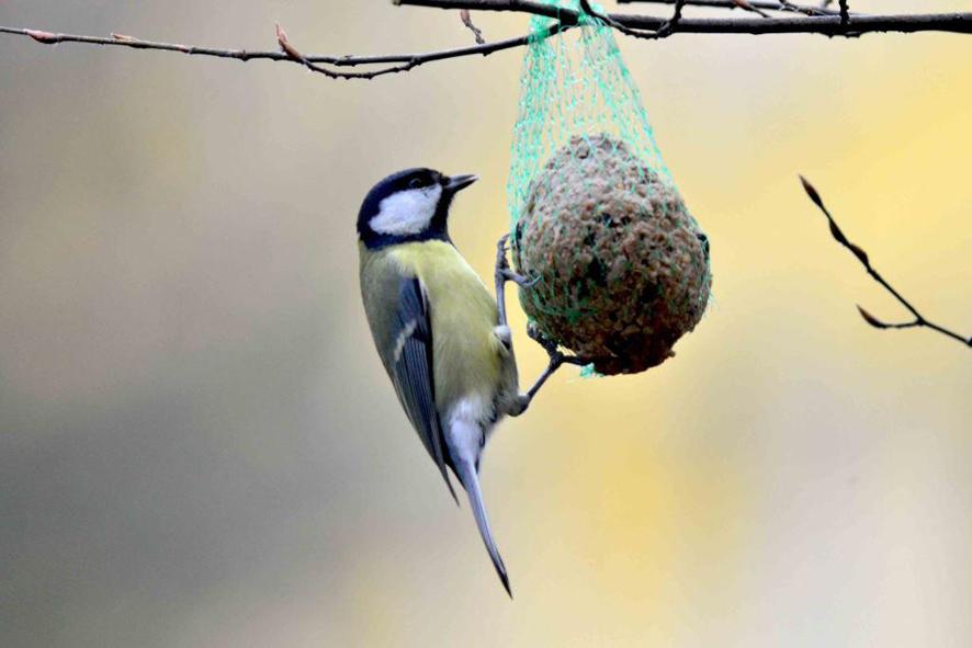Vogelfutterung Im Winter Naturschutzbund Osterreich